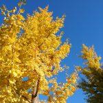 秋の日はつるべ落とし!