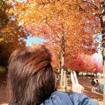秋は嫌い、でも美しい