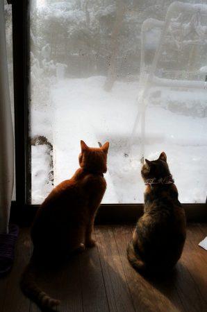 雪見にゃんこ