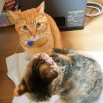 再び冷蔵庫に捕まる猫