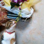 猫は花が好き