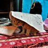 寛容な猫たち