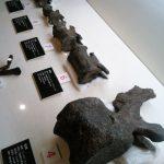 博物館のホネ
