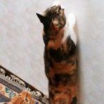 猫を狂わせるダ・バード