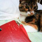 服薬介助をする猫