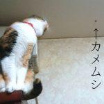 猫とカメムシ