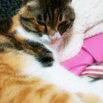 地震と人と猫