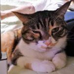 土曜の病院と眠る猫